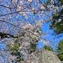 冠木門の櫓台と桜