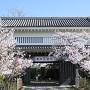 桜が彩る大手櫓門