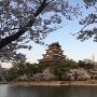桜と天守(2)