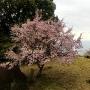 桜咲く鬼の見晴台