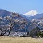 本丸跡と富士 Part 4 春