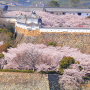桜あふれて(2)