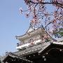 桜と展望台