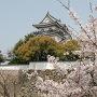 桜と岸和田城