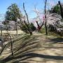 桜祭り会場2