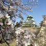 カメラ目線の大坂城(西の丸庭園より)