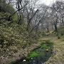 桜雲橋下の堀