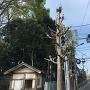 新川天神山青少年広場入口