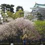 二之丸広場から春を感じる