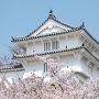 カの櫓(春)