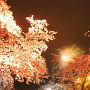 夜桜と花火