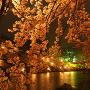 夜桜咲き乱れて