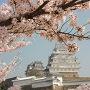 桜酔い姫路城