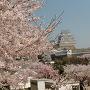 桜一色姫路城