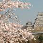 姫路城よ桜よ