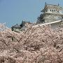 姫路城桜がいっぱい