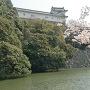 姫路城桜とともに