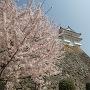 姫路城桜色