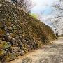 石垣と桜(馬場側)