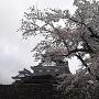 桜と大野城