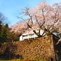 鶴丸倉庫と桜
