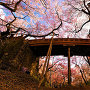 桜雲橋と桜