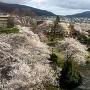 桜満開の本丸