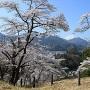 桜のハートと富士山