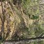 主郭から上の丸に向かう尾根