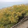 石段からの眺望