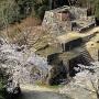 大矢倉跡にも春が来た。