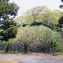 桐ノ木坂御門辺りから天守台方向の石垣