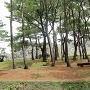 松林越しの城壁