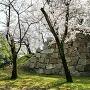 福島正則無断修復の石垣