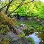 新緑の好古園(1)