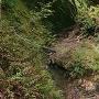 堀跡?の川