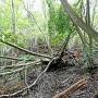 倒木で遮られた登城道