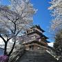 高島城に春が来た。