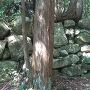 伊庭丸の石垣
