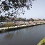 京橋から中堀のさくら並木