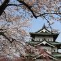 満開の桜と天守