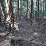 堀切から落ちる竪堀