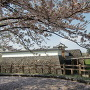 桜の本丸風景