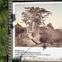 江戸時代の写真