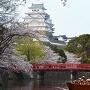 和船に乗って特別なお花見を。