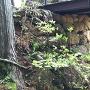 Ⅴ郭に架かっている橋の下の石垣