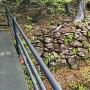 橋の上から見た石垣