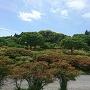 森林つつじ公園から山頂(本丸)を望む