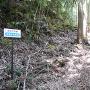 屈曲する竪堀