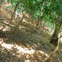 畝状竪堀群(二の木戸下北斜面)